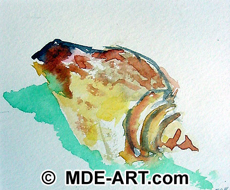 Seashell watercolor art