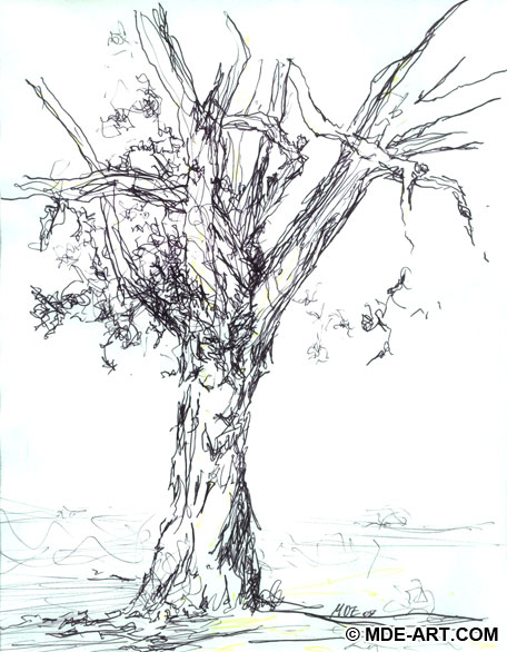 Bracy blog: tree drawings