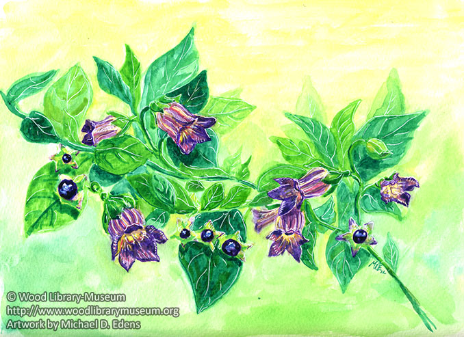 Atropa Belladonna Watercolor Note Card